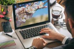 Primavera, árbol de almendra que florece en una pantalla de ordenador Hombre que trabaja en su oficina foto de archivo