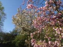 Primavera, época de despertar la naturaleza con toda su magia fotos de archivo