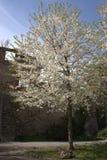 Primavera, época de despertar la naturaleza con toda su magia imagenes de archivo