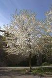 Primavera, época de despertar la naturaleza con toda su magia foto de archivo libre de regalías
