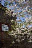 Primavera, época de despertar la naturaleza con toda su magia fotos de archivo libres de regalías