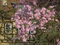 Primavera, época de despertar la naturaleza con toda su magia imagen de archivo
