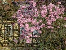 Primavera, época de despertar la naturaleza con toda su magia imagen de archivo libre de regalías