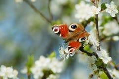 Primavera Foto de archivo libre de regalías