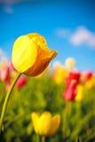 Primavera Imagem de Stock