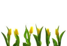 Primavera Fotografia Stock Libera da Diritti