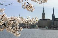 Primavera Fotografía de archivo libre de regalías