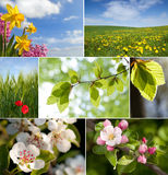 Primavera Fotos de archivo