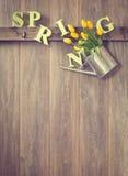 Primavera Immagini Stock Libere da Diritti