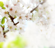 Primavera Fotografie Stock Libere da Diritti