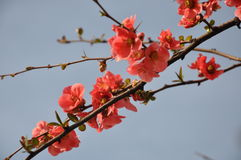 Primavera Foto de archivo