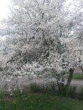 Primavera Imagen de archivo