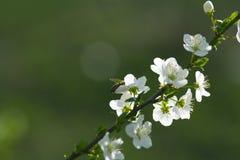 Primavera Foto de Stock Royalty Free