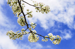 Primavera imagen de archivo libre de regalías