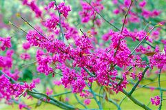 primavera Imagens de Stock