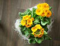 primavera Imágenes de archivo libres de regalías
