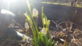 Primavera fotografía de archivo