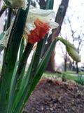 Primavera Fotos de archivo libres de regalías
