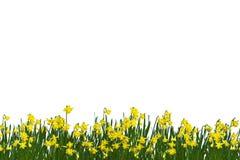 Primavera Fotografia Stock