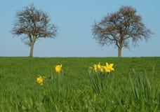 Primavera Immagini Stock
