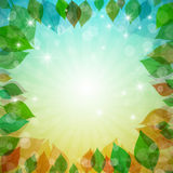 Primavera abstracta del vector del ct del vector, verano, otoño, fondo del invierno con las hojas Imagen de archivo libre de regalías