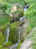 Primavera - acqua pura fotografie stock