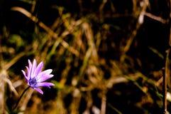 Primavera adelante Fotos de archivo libres de regalías