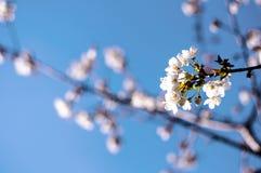 Primavera adelante Imagenes de archivo