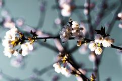 Primavera adelante Foto de archivo