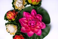 Primavera agradable - arregle maravillosamente las flores foto de archivo libre de regalías