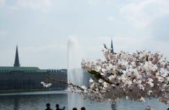 Primavera al Alster Fotografia Stock Libera da Diritti