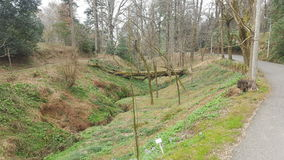 Primavera, albero caduto Immagine Stock Libera da Diritti