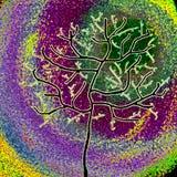 Primavera, albero con le giovani foglie verdi Fotografia Stock