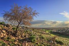 primavera Alta Murgia National Park: mandorlo selvatico in fioritura all'alba Puglia-ITALIA-è un plateau del calcare, con gli amp Immagine Stock Libera da Diritti