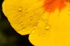 Primavera amarilla Fotos de archivo
