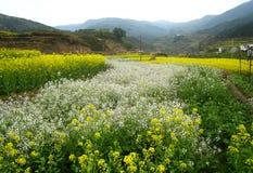 Primavera in anticipo in Cina del sud Fotografie Stock Libere da Diritti