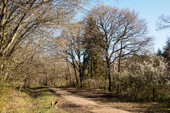 Primavera in anticipo nel terreno boscoso di Sussex Fotografie Stock