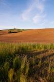 Primavera arata del campo che pianta l'azienda agricola di Palouse Immagine Stock Libera da Diritti