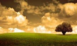primavera arbol Στοκ φωτογραφίες με δικαίωμα ελεύθερης χρήσης
