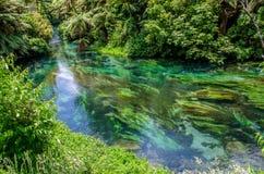 Primavera azul que está situada en Te Waihou Walkway, Hamilton New Zealand fotos de archivo libres de regalías