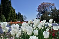 Primavera in Balchik Fotografia Stock