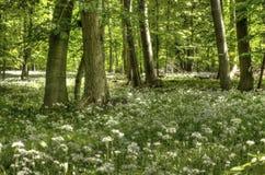Primavera in Bassa Sassonia Fotografia Stock Libera da Diritti
