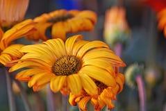 Primavera benvenuta - 1 Immagini Stock