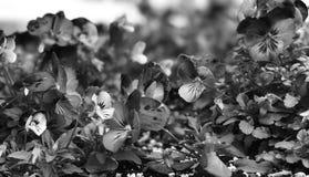 Primavera blanco y negro Imágenes de archivo libres de regalías