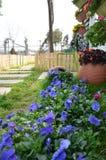 Primavera blu Fotografia Stock
