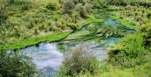 Primavera blu che è posizionata a Te Waihou Walkway, Hamilton New Zealand fotografia stock libera da diritti