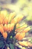 primavera borrada da flor da luz da cor Foto de Stock