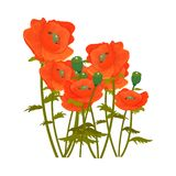 Primavera botánica del vector de la flor del ramo del diseño de la decoración de la naturaleza del diseño de la flor del dibujo d Fotografía de archivo