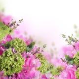 Primavera brillante imagen de archivo libre de regalías