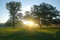 Primavera brumosa del prado en la salida del sol Imagen de archivo